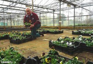 Tonnie Bulter in zijn kwekerij Imenhof-Goodwill.nl