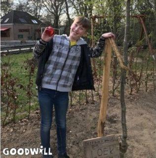 Nieuwe appelboom geplant - Goodwill.nl